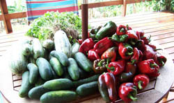 Only freshest vegetables served at or restaurant